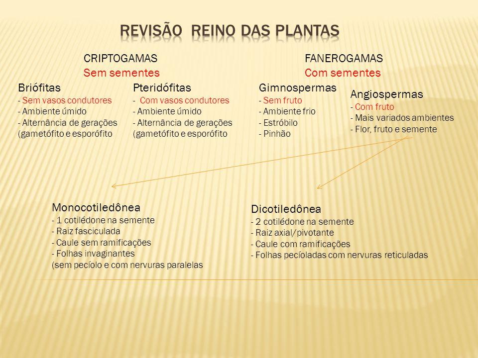 REVISÃO REINO DAS PLANTAS
