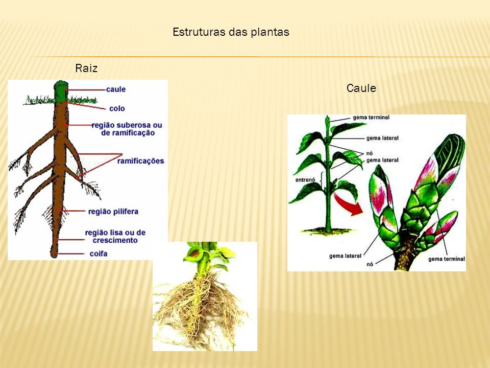 Estruturas das plantas