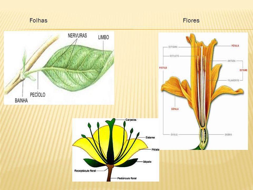 Folhas Flores