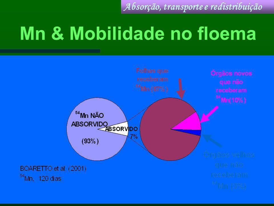 Mn & Mobilidade no floema