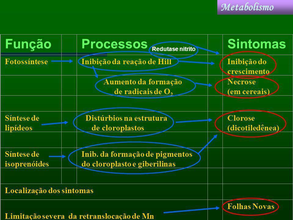 Função Processos Sintomas Metabolismo Fotossíntese
