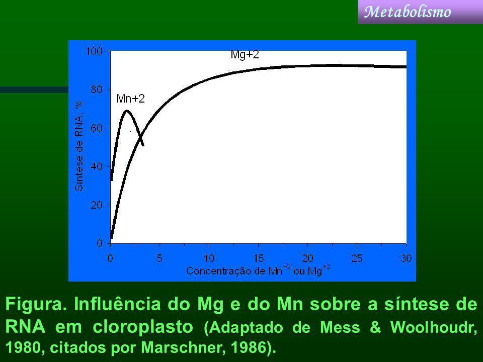 Metabolismo Figura.