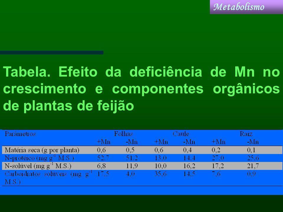 Metabolismo Tabela.