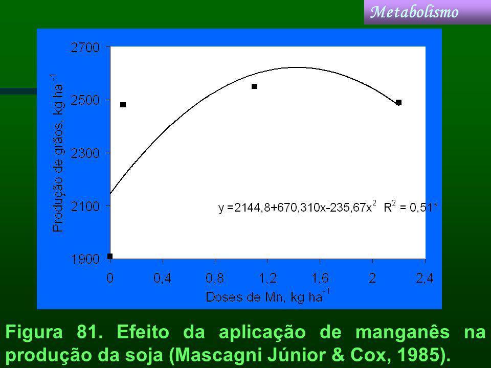 Metabolismo Figura 81.