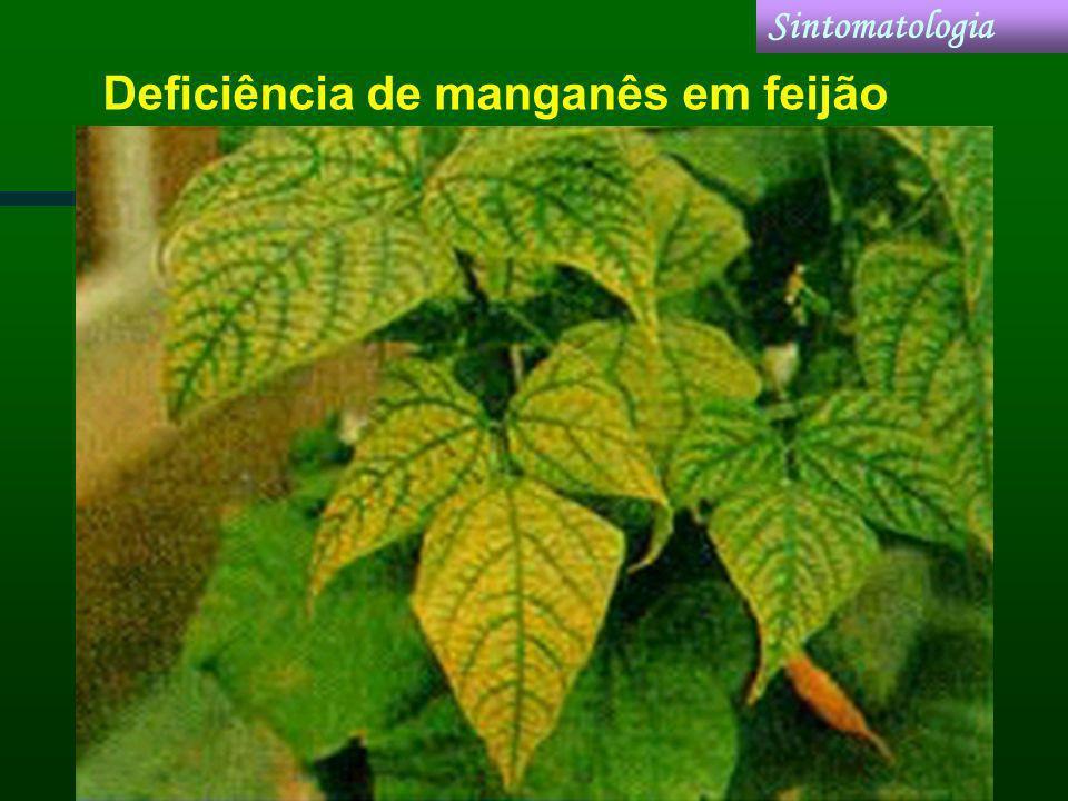 Deficiência de manganês em feijão