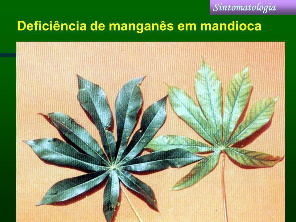 Deficiência de manganês em mandioca