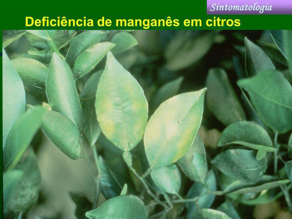 Deficiência de manganês em citros