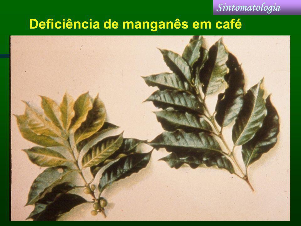 Deficiência de manganês em café