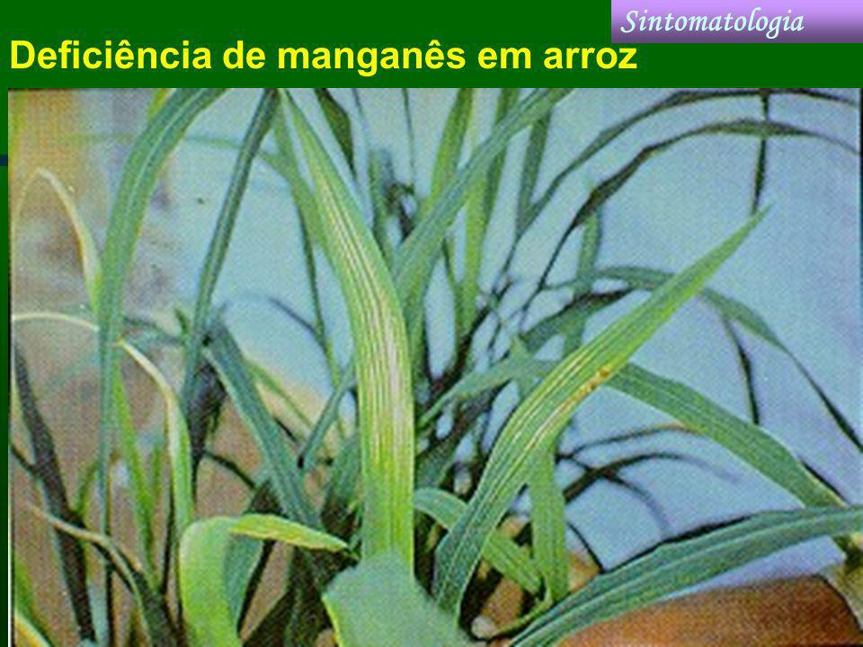 Deficiência de manganês em arroz