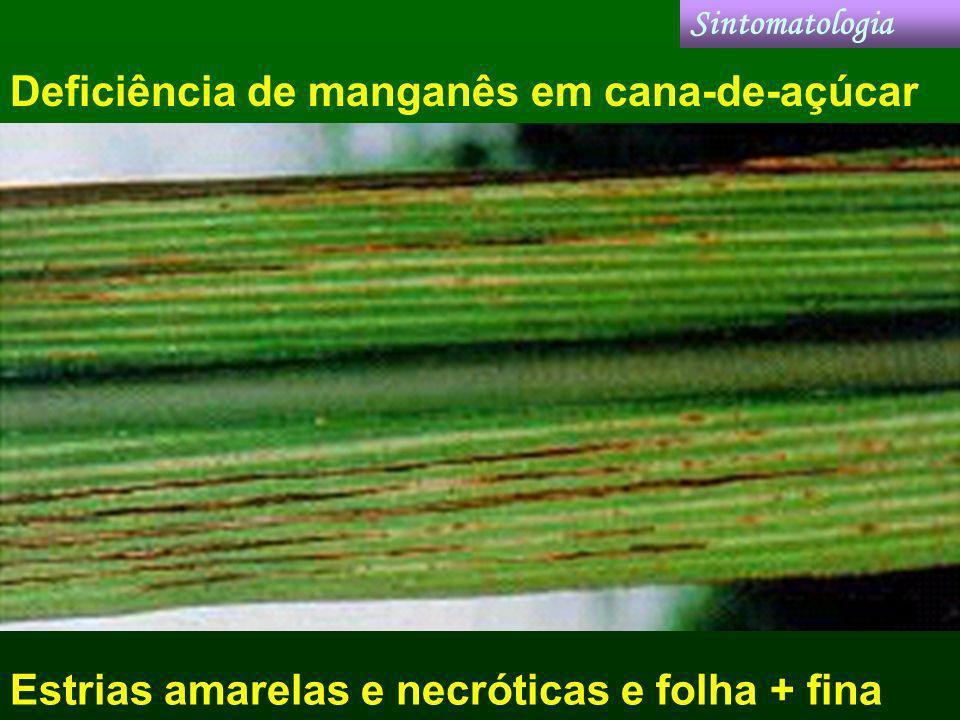 Deficiência de manganês em cana-de-açúcar