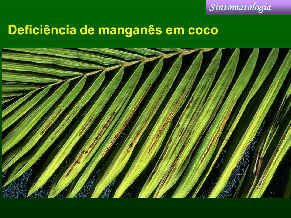 Deficiência de manganês em coco