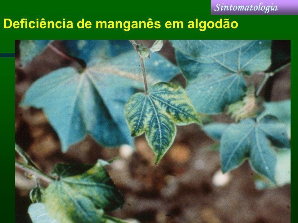 Deficiência de manganês em algodão