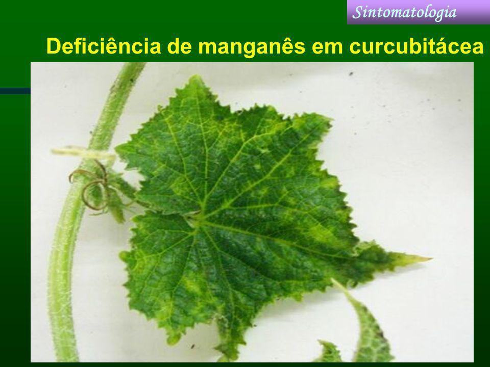 Deficiência de manganês em curcubitácea