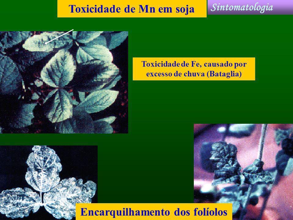 Toxicidade de Mn em soja Encarquilhamento dos folíolos