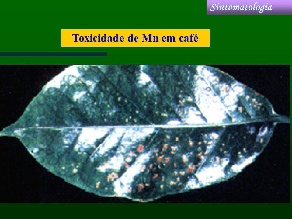 Toxicidade de Mn em café