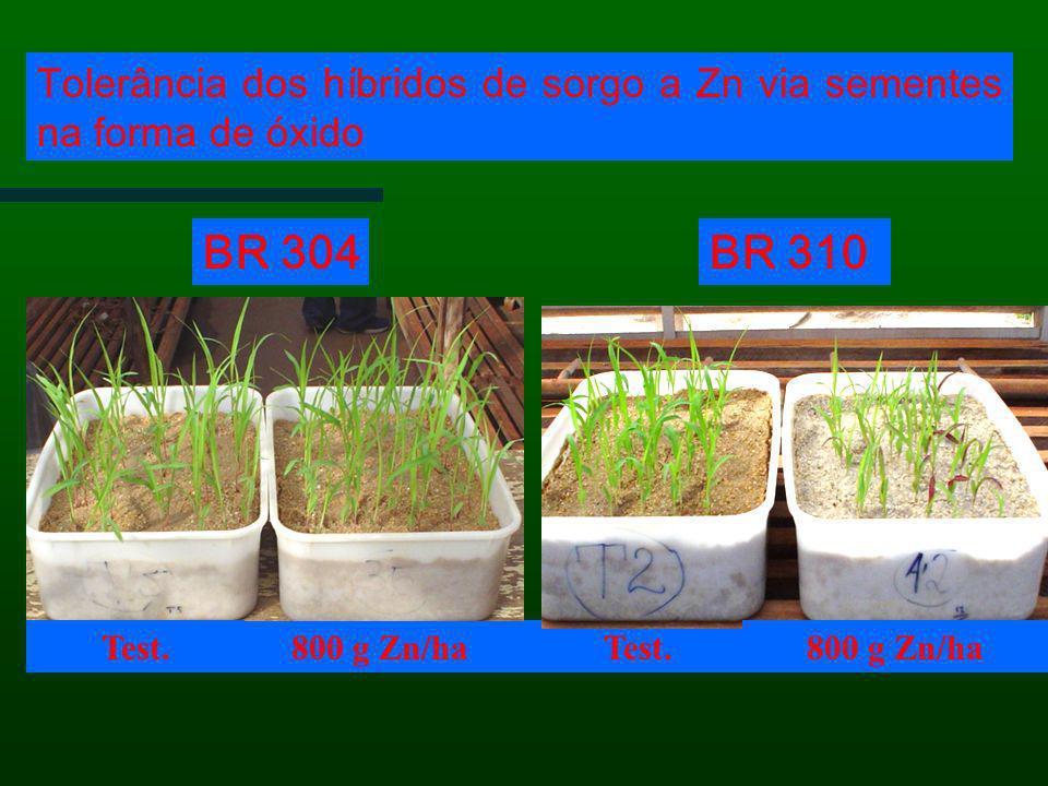 Tolerância dos híbridos de sorgo a Zn via sementes na forma de óxido