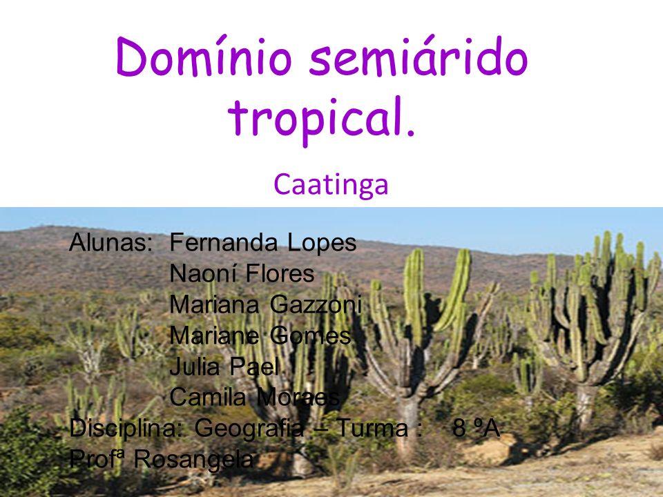 Domínio semiárido tropical.