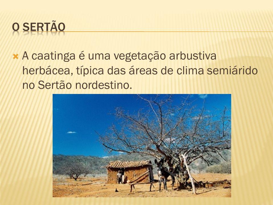 O SERTÃO A caatinga é uma vegetação arbustiva herbácea, típica das áreas de clima semiárido no Sertão nordestino.