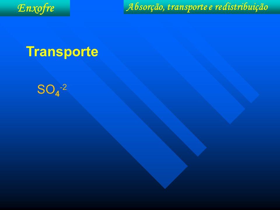 Enxofre Absorção, transporte e redistribuição Transporte SO4-2