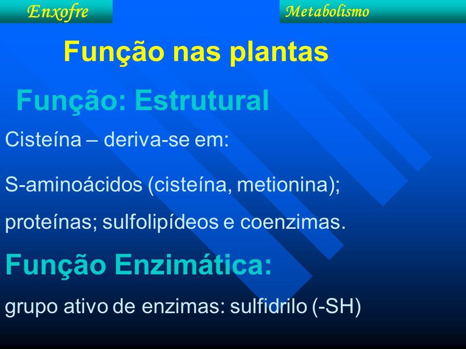 Função nas plantas Função: Estrutural Função Enzimática: Enxofre