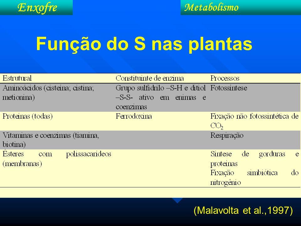 Enxofre Metabolismo Função do S nas plantas (Malavolta et al.,1997)