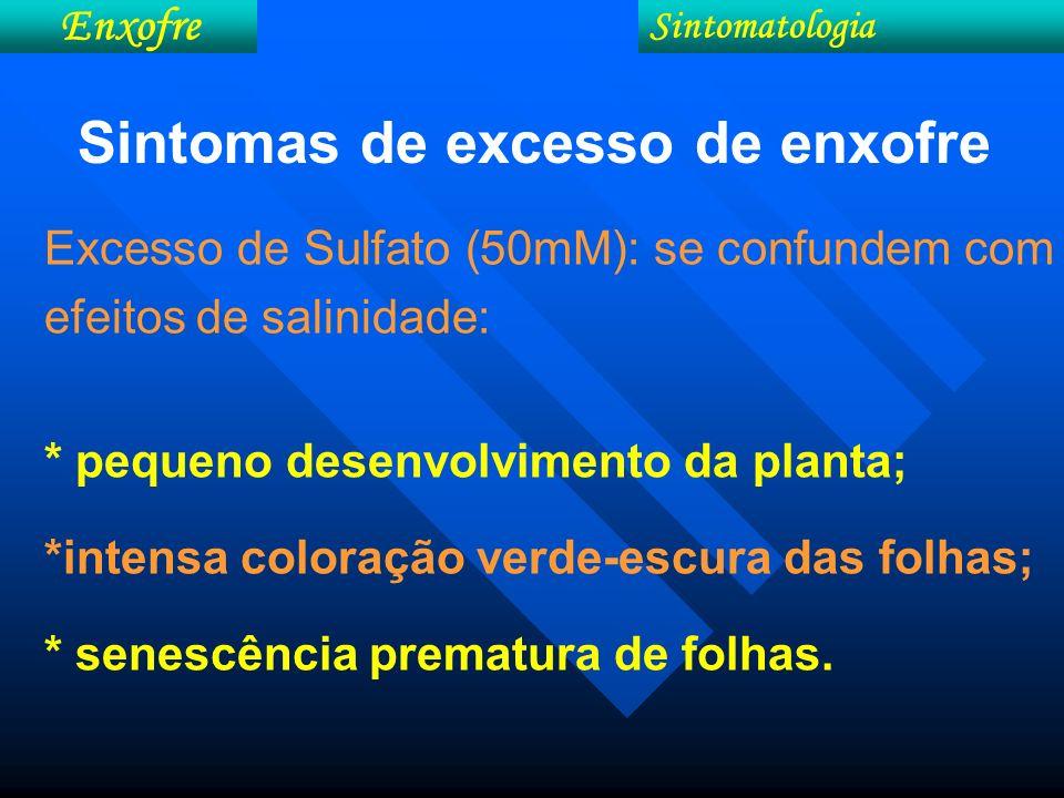 Sintomas de excesso de enxofre
