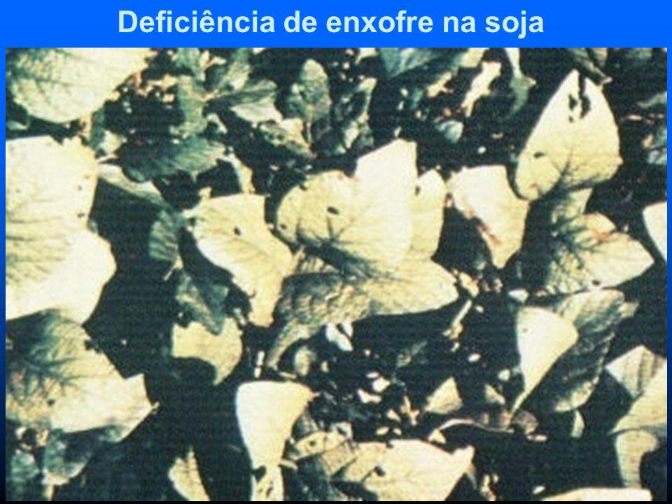 Deficiência de enxofre na soja