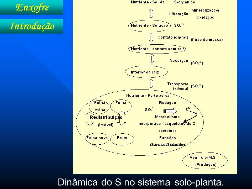 Enxofre Introdução Dinâmica do S no sistema solo-planta.