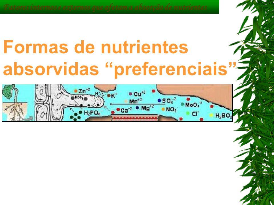 Formas de nutrientes absorvidas preferenciais