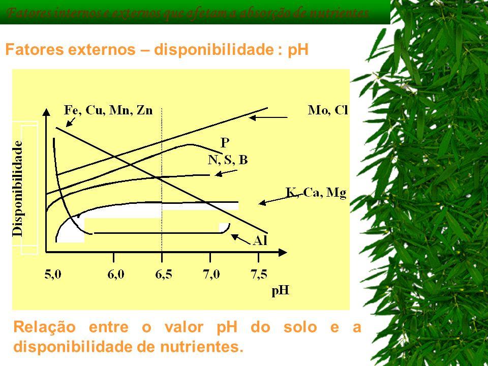 Fatores internos e externos que afetam a absorção de nutrientes