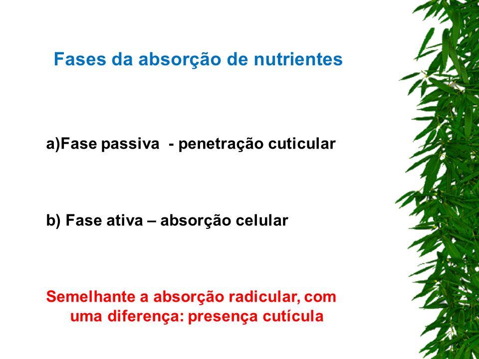Fases da absorção de nutrientes