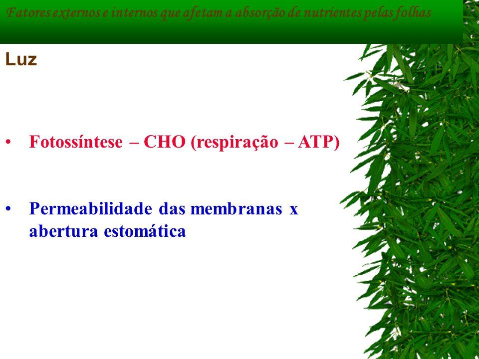 Fotossíntese – CHO (respiração – ATP)