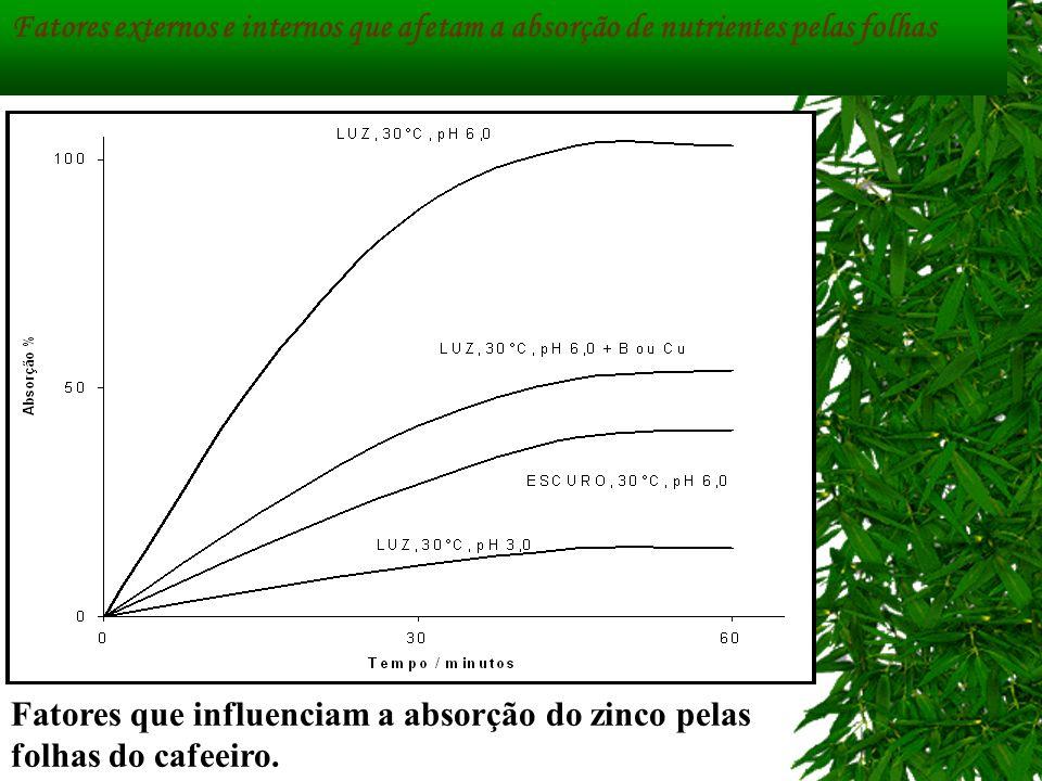 Fatores externos e internos que afetam a absorção de nutrientes pelas folhas