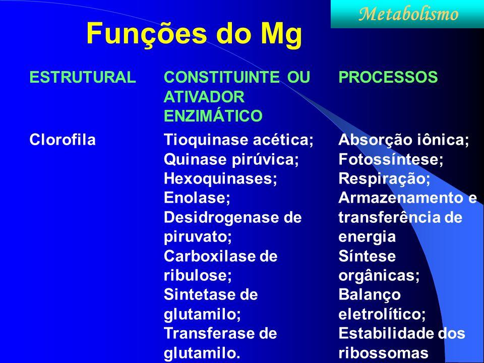 Funções do Mg Metabolismo ESTRUTURAL