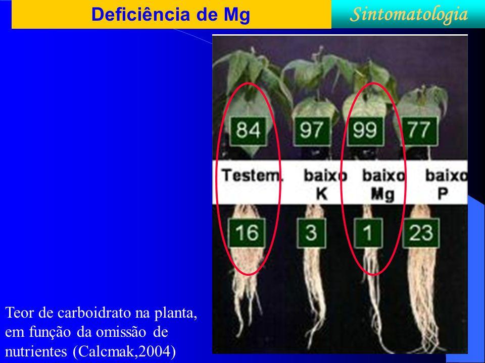 Sintomatologia Deficiência de Mg