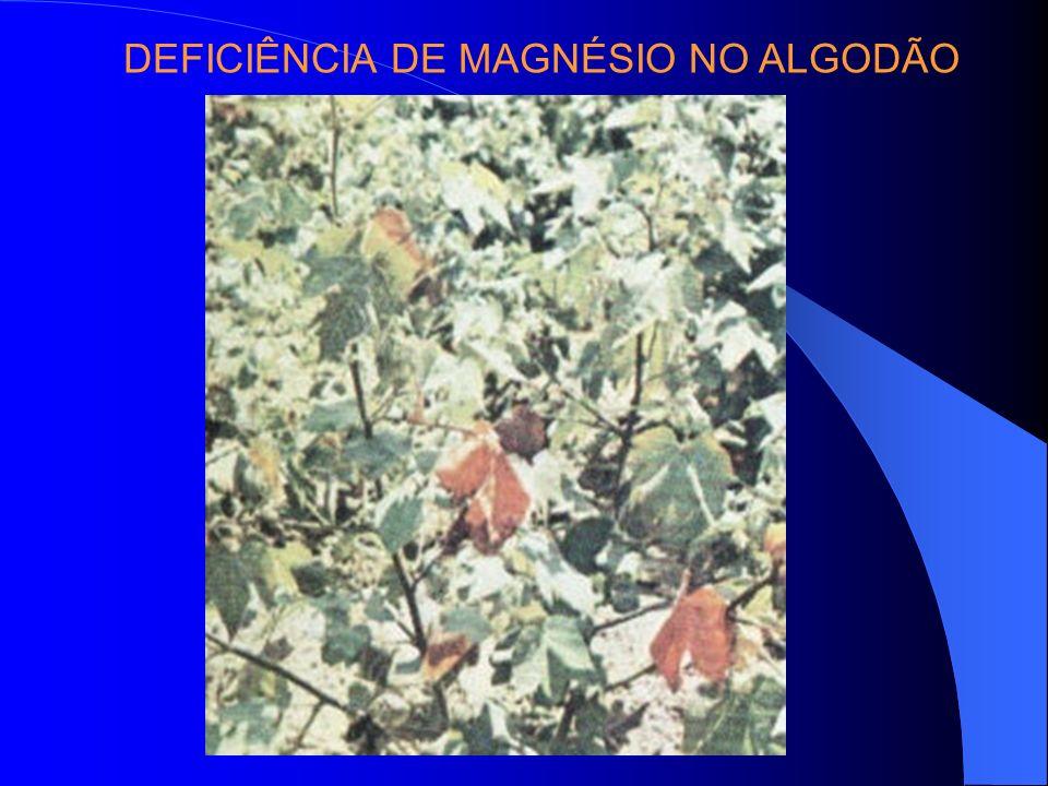 DEFICIÊNCIA DE MAGNÉSIO NO ALGODÃO
