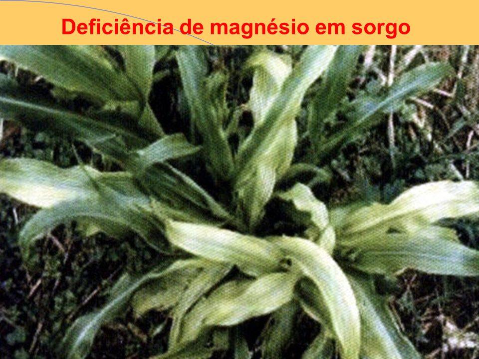 Deficiência de magnésio em sorgo