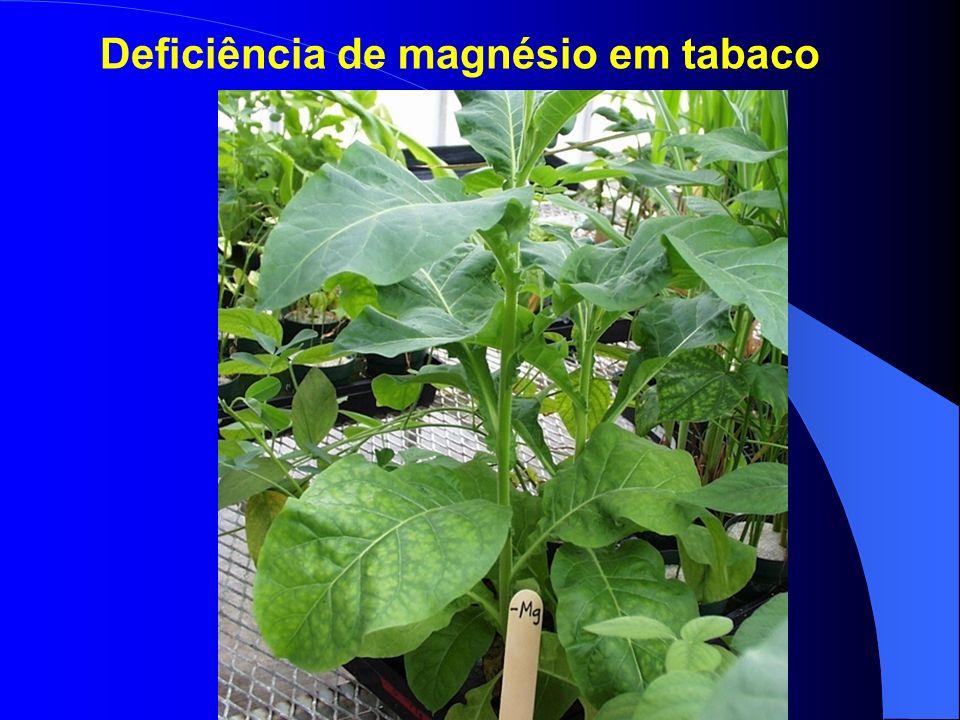 Deficiência de magnésio em tabaco