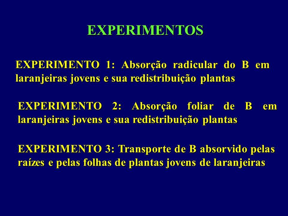 EXPERIMENTOS EXPERIMENTO 1: Absorção radicular do B em laranjeiras jovens e sua redistribuição plantas.