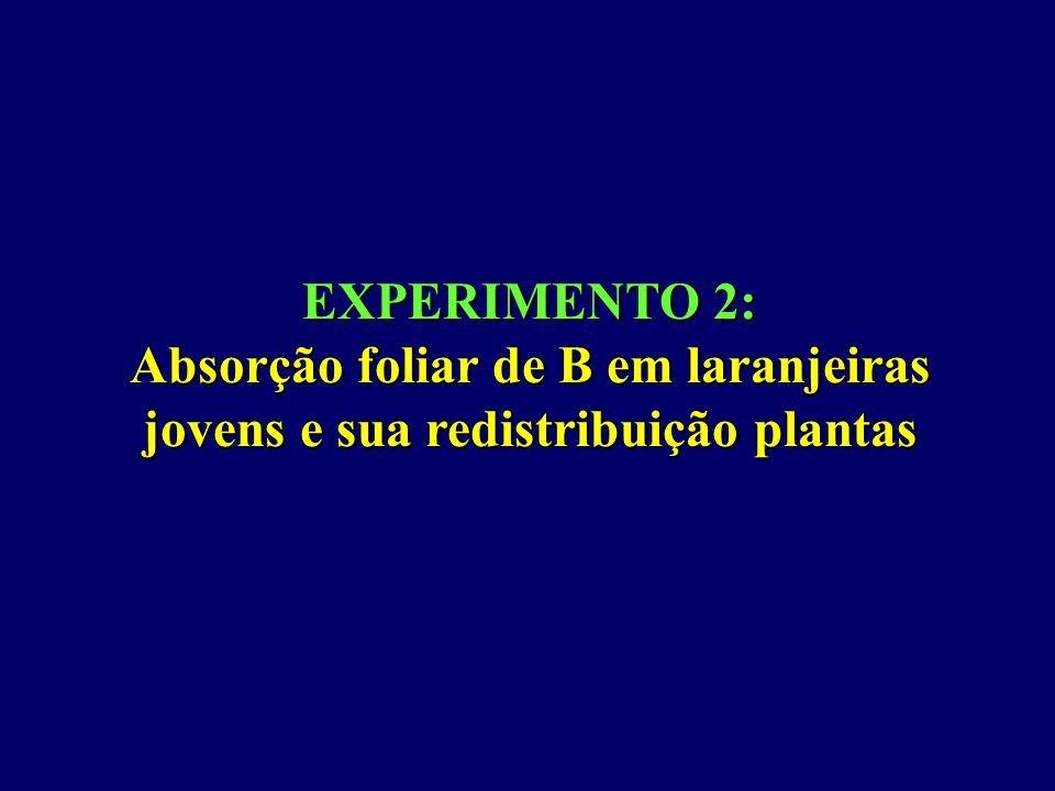 EXPERIMENTO 2: Absorção foliar de B em laranjeiras jovens e sua redistribuição plantas