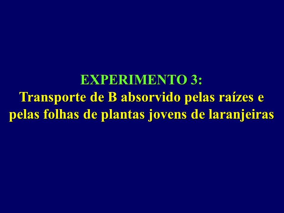 EXPERIMENTO 3:Transporte de B absorvido pelas raízes e pelas folhas de plantas jovens de laranjeiras.