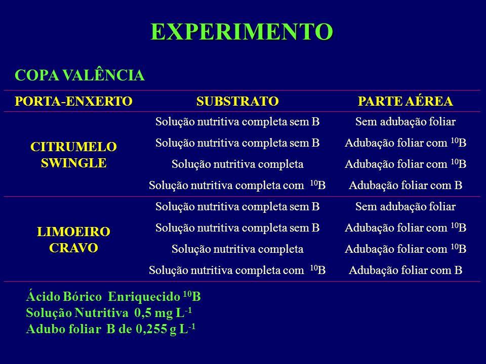 EXPERIMENTO COPA VALÊNCIA PORTA-ENXERTO SUBSTRATO PARTE AÉREA