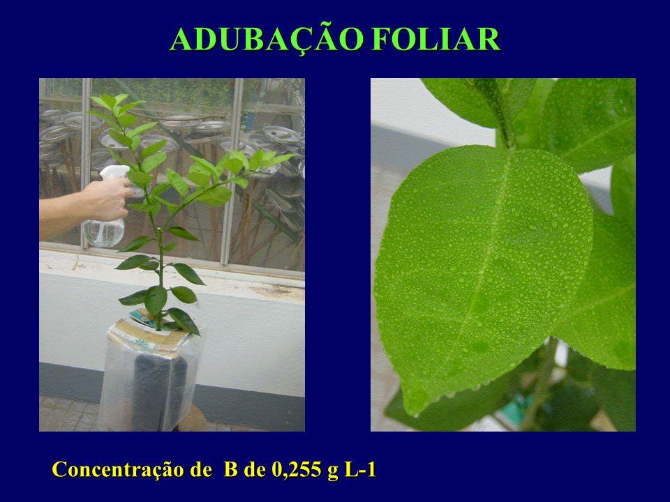 ADUBAÇÃO FOLIAR Concentração de B de 0,255 g L-1