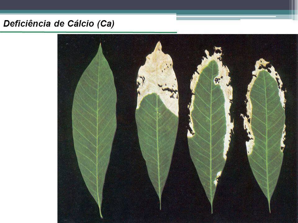 Deficiência de Cálcio (Ca)