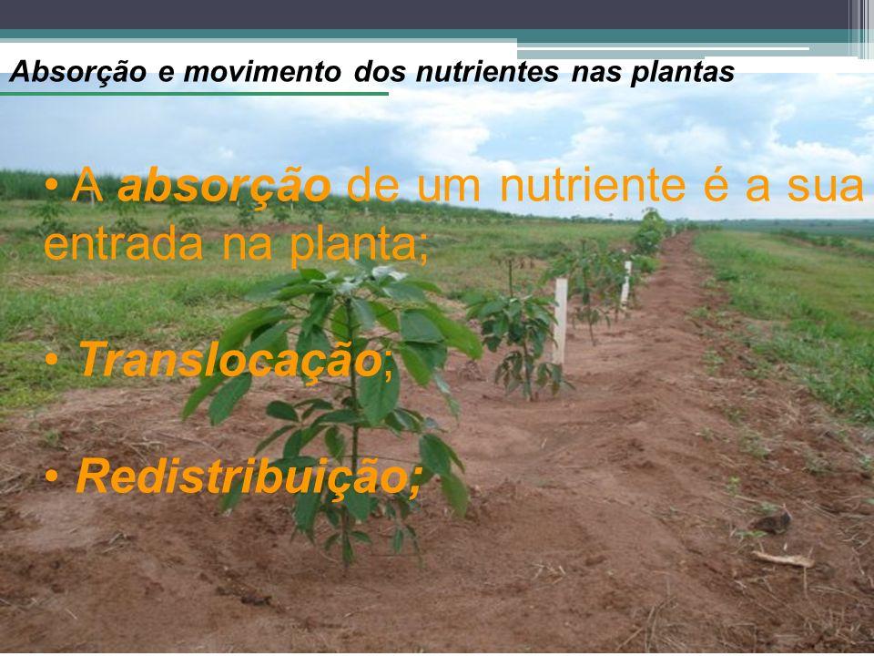A absorção de um nutriente é a sua entrada na planta;