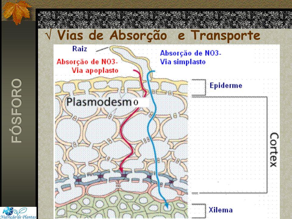  Vias de Absorção e Transporte