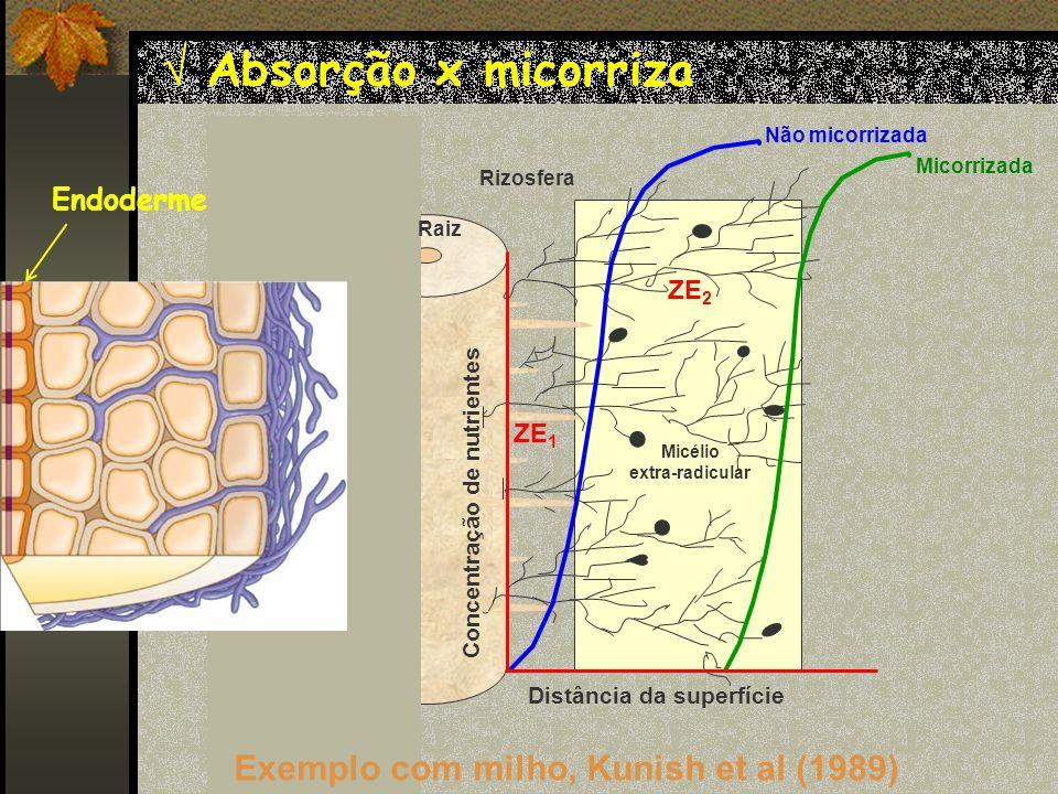 Absorção x micorriza Exemplo com milho, Kunish et al (1989)