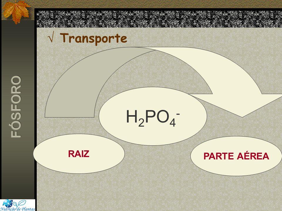 Transporte H2PO4- FÓSFORO RAIZ PARTE AÉREA