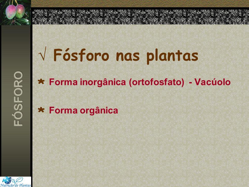Fósforo nas plantas. Forma inorgânica (ortofosfato) - Vacúolo