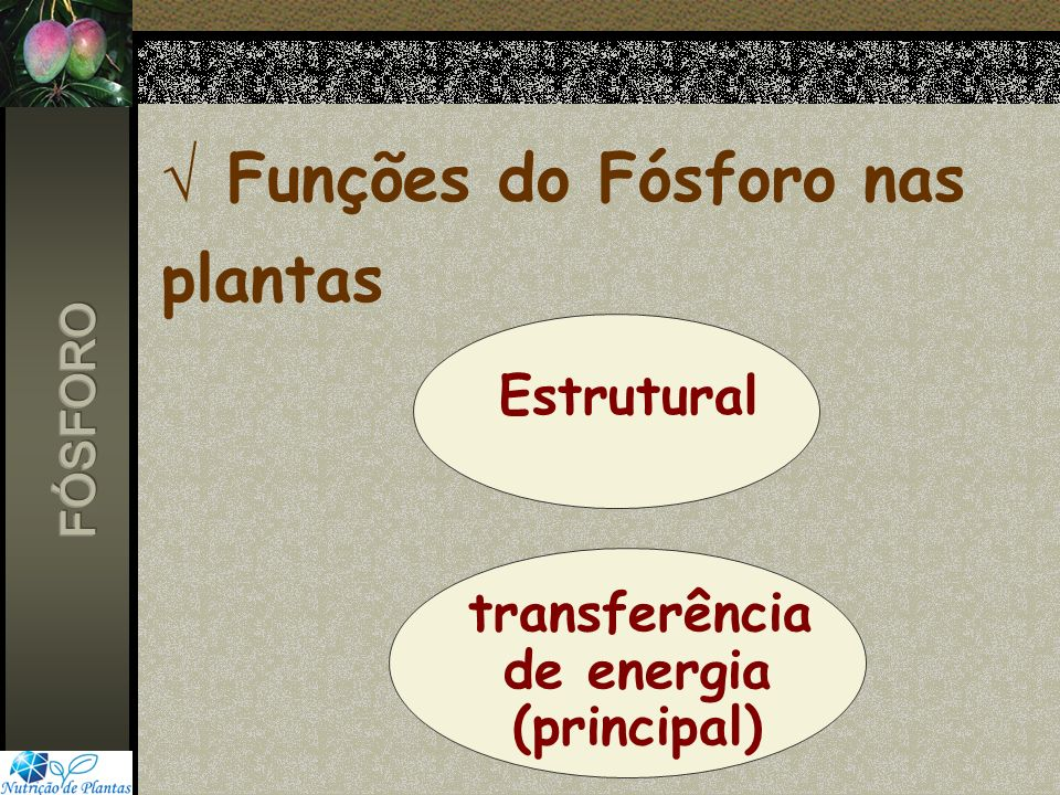 Funções do Fósforo nas plantas